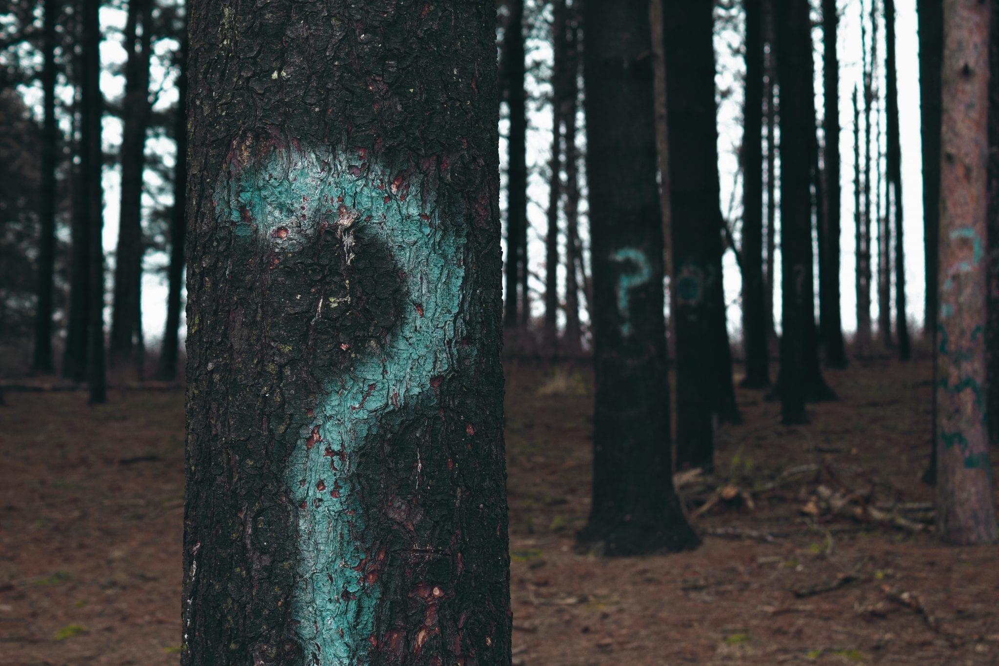 Twelve Questions To Greatness