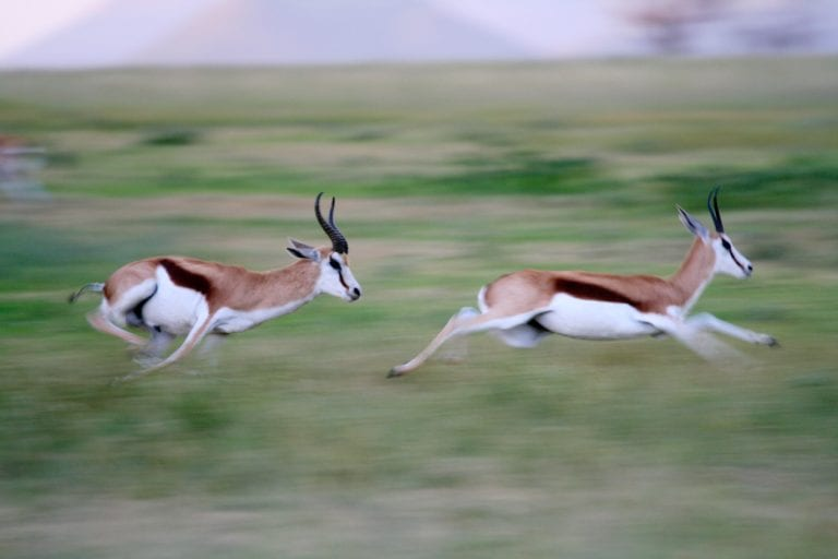 Is Your Company Agile Enough to Sprint like a Gazelle?